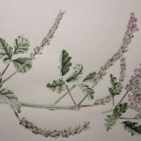 """Botanic artists make science visible"""