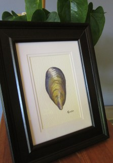 The framed mussel shell (Photo copyright: Anne Lawson 2015)