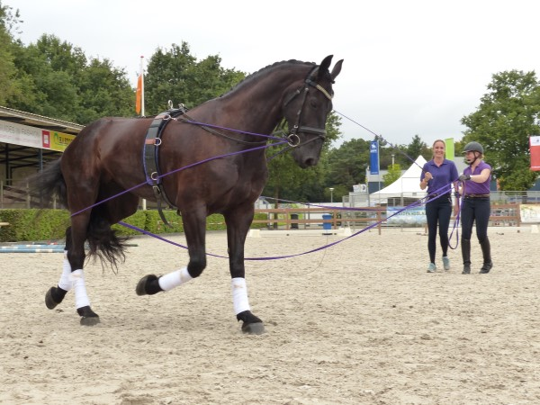 Horse Event- Longeer Clinic