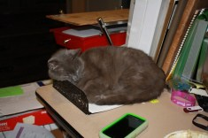 Mrs. Dorothy Parker asleep in my inbox.