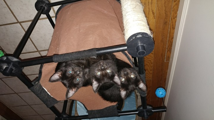 Picture of kittens Lilly, Lulu and Luna, illustrating Writing a Novel