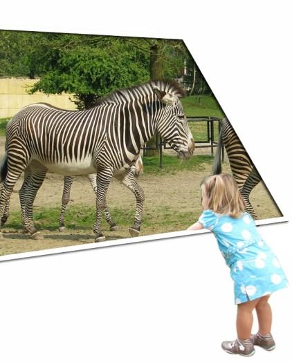 Liv en de zebra