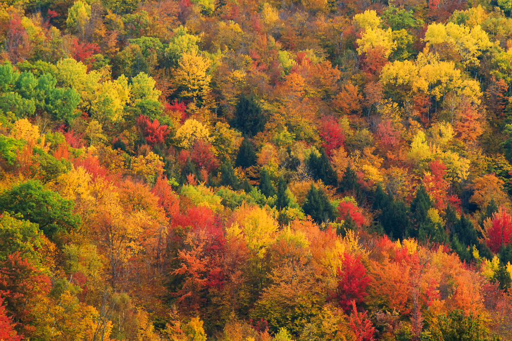 Fall Colors Wallpaper New England Fall In New Hampshire Anne Mckinnell Photography