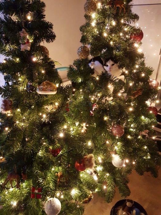 Levende kerstboom, starring Nijntje