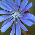 Research Books for Meditation/Contemplation Time - Beautiful Blue Flower