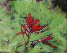 Indian paintbrush 11x14 acrylic