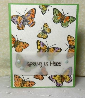 March-2016-Butterflies