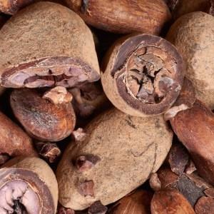 feve-de-cacao-en-robe-de-chocolat
