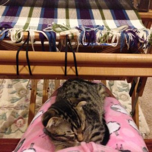 Benny decided that weaving was not an impediment, when he was ready to nap on a lap!