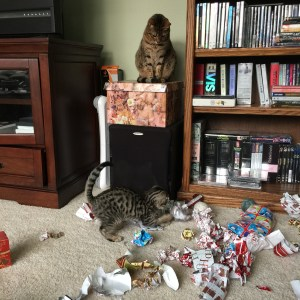 Older sister Jasmine watched kitten Benedict Cumbercat very carefully.  Benny thought the Christmas wrapping was a lot of fun!