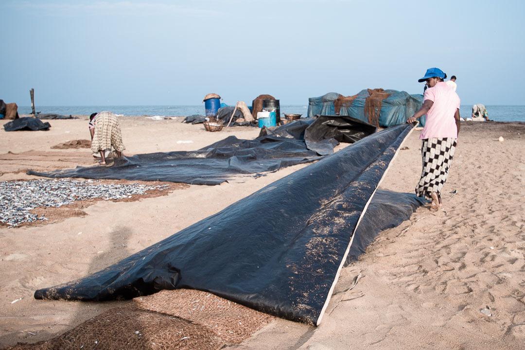 Negombo | Fischmarkt
