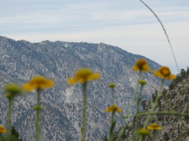 Mt. Baldy 006