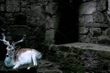 A deer appears through a White Point