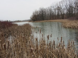 lake moodie s