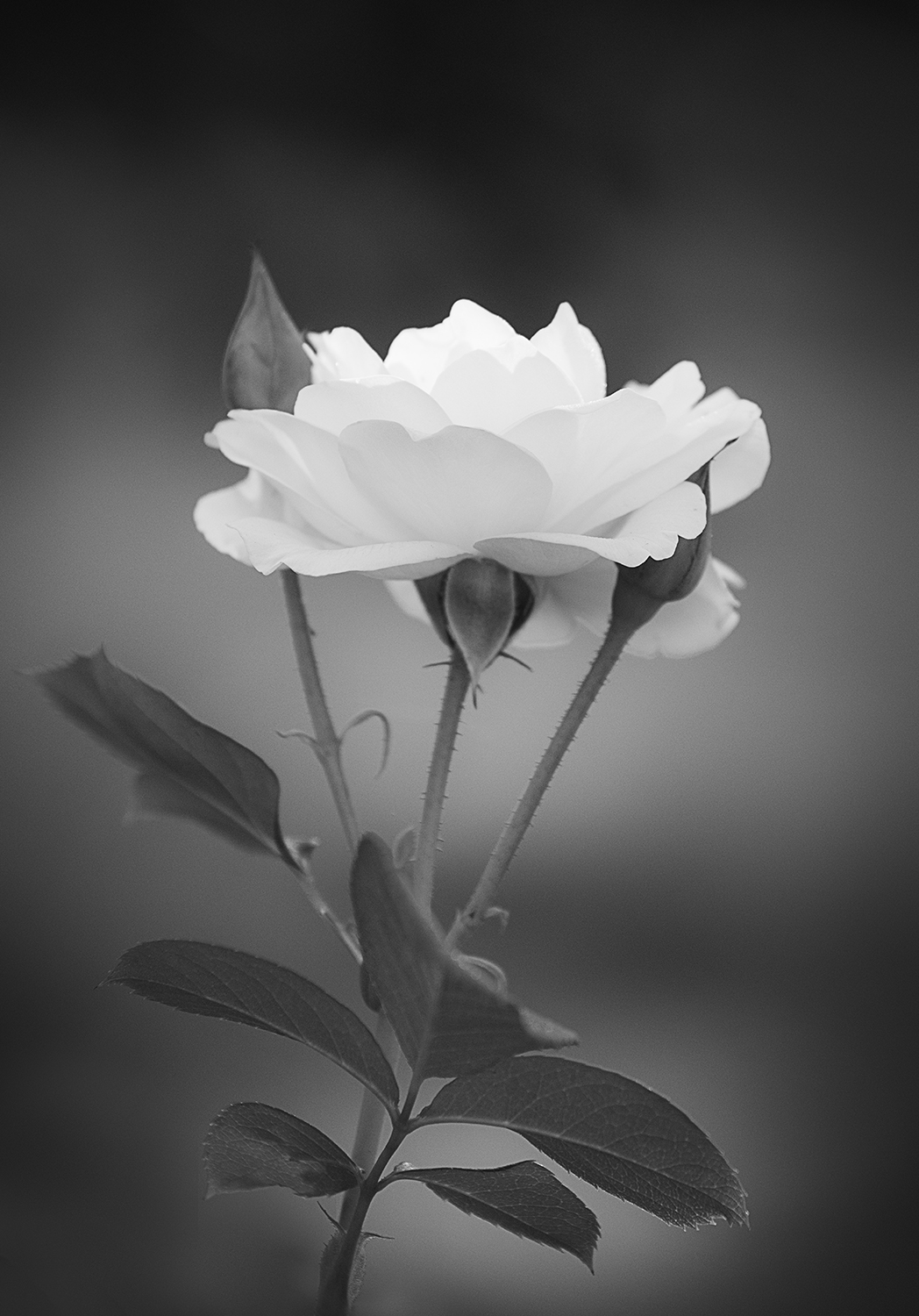 flowers in black and