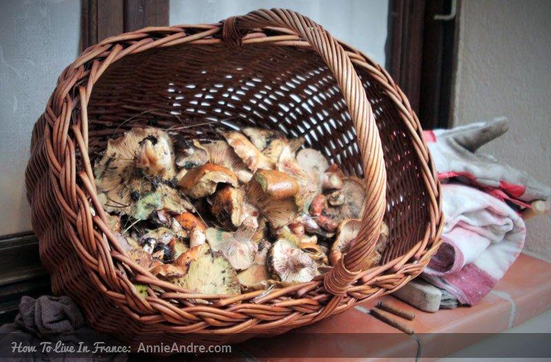 basket-of-mushrooms