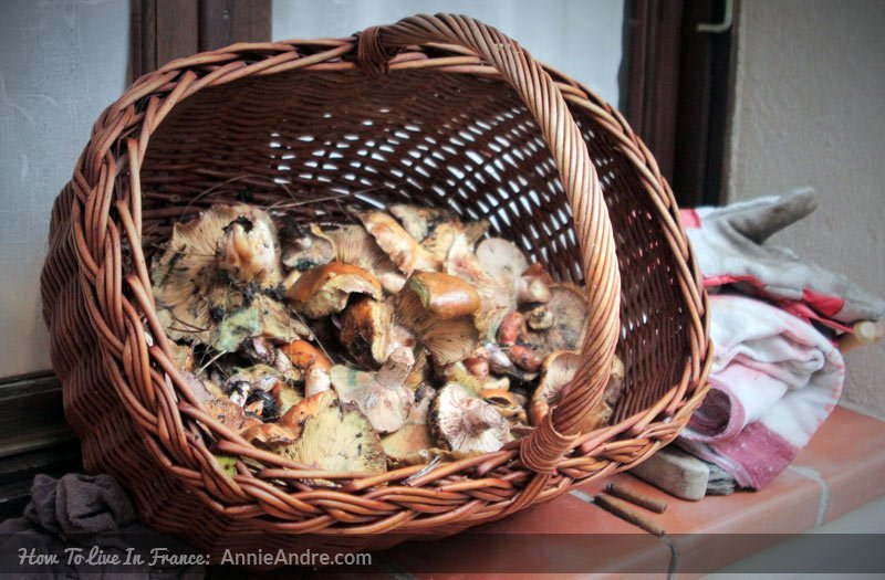 basket-of-mushrooms