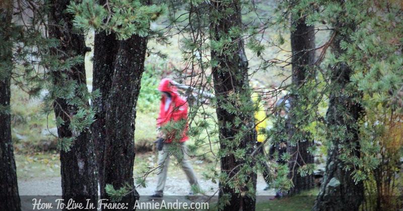 mushroom-hunting-woods