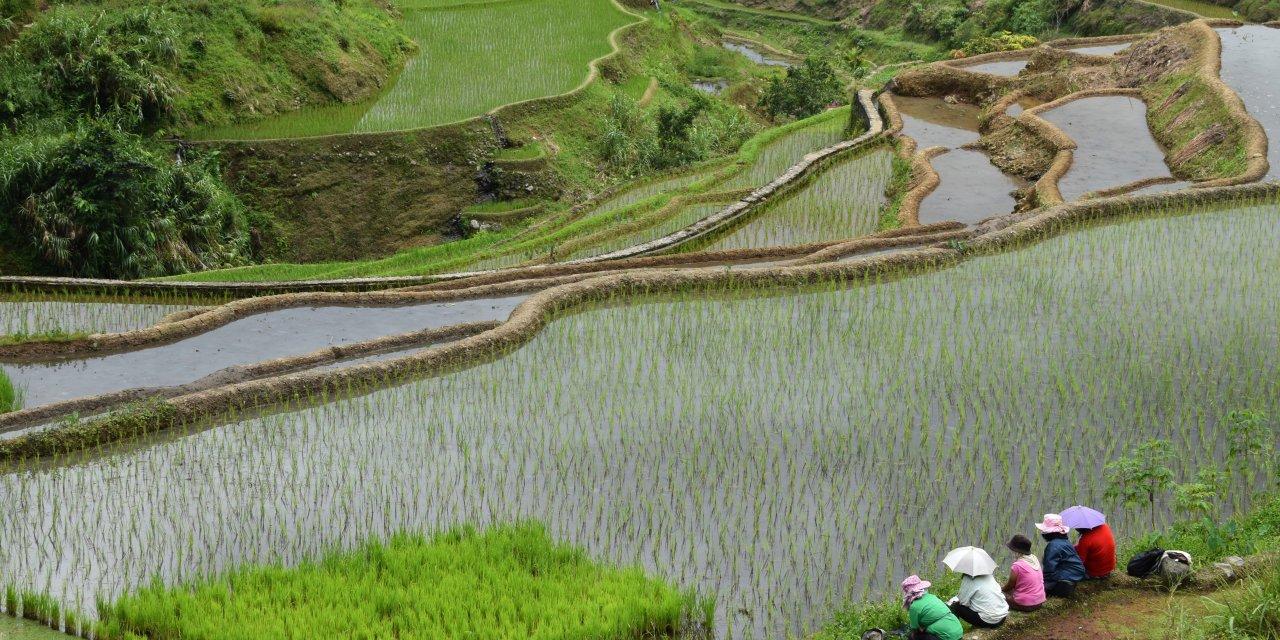 Banaue et ses rizières