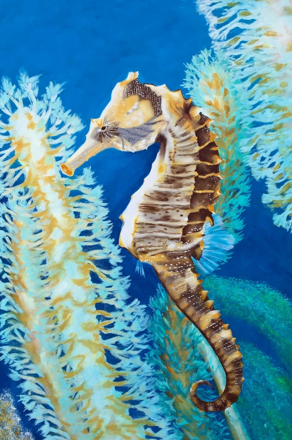Seahorses Archives