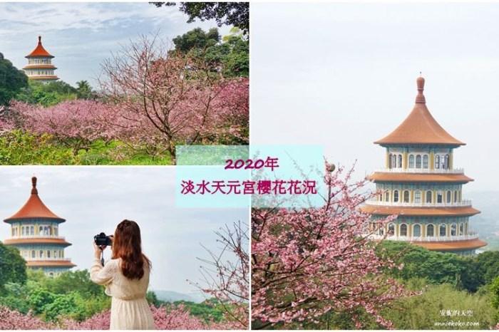 [台北賞櫻景點]淡水天元宮 粉紅三色櫻渲染山城 雄偉天元宮與櫻花的溫柔對話