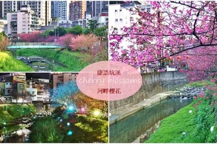 [汐止賞櫻]康誥坑溪河畔櫻花大滿開 像精靈般落入凡間夜景 彩色夜櫻超美