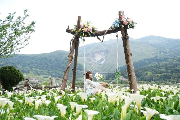 [2020陽明山海芋季]名陽匐休閒農莊 白色花田裡的唯美鞦韆 遙望小油坑夢幻山景 竹子湖最浪漫賞芋景點