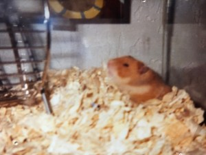 My hamster Brady