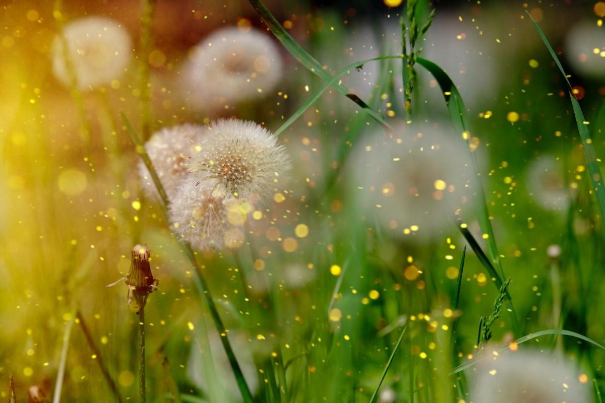 Adventures in Weeds