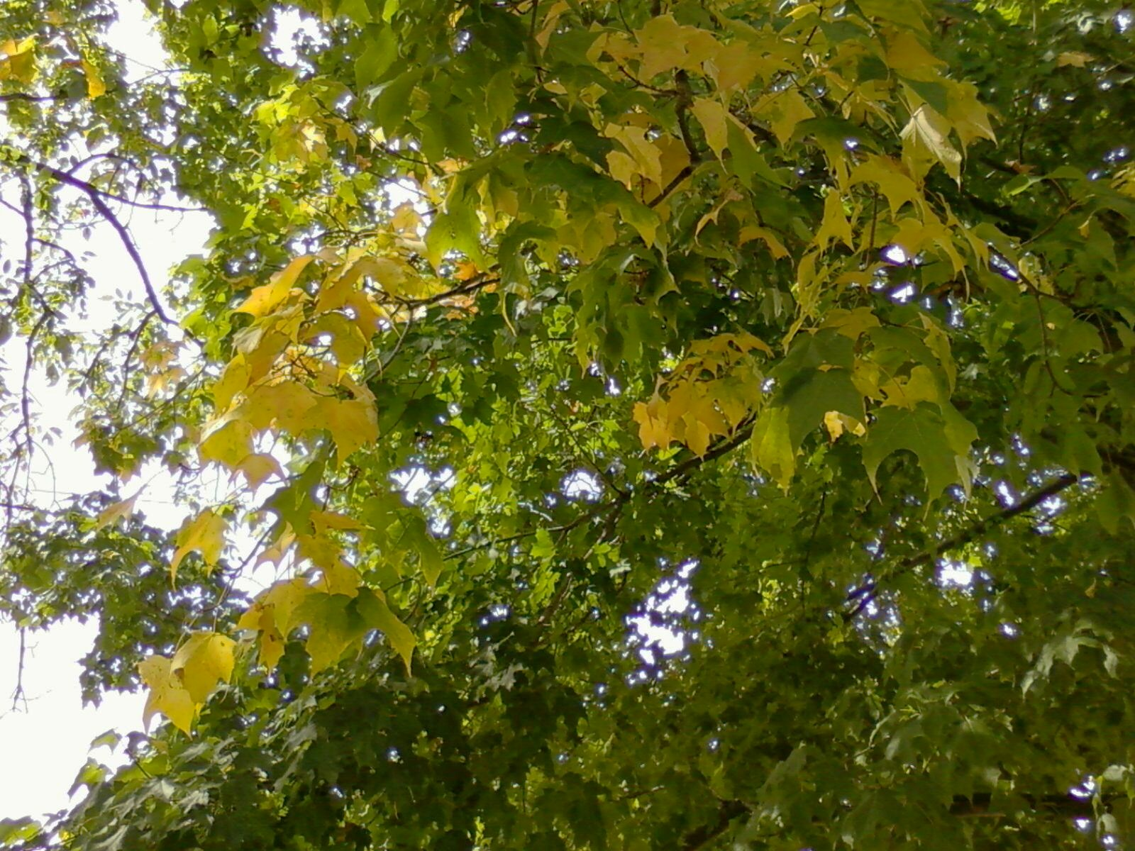 The Beginnings Of Autumn Color