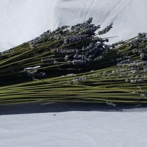 Lavender Sticks Bundles