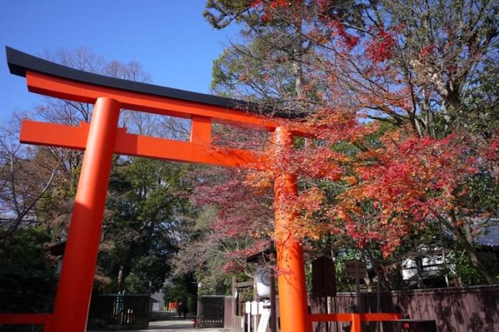 [京都] 尋找京都最後一抹楓紅 – 下鴨神社 糺ノ森