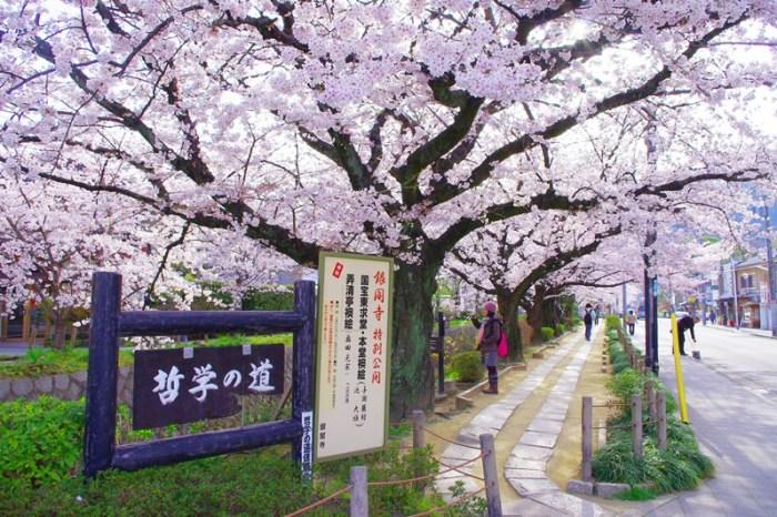 [2013花見] 櫻滿開 – 京都 哲學之道