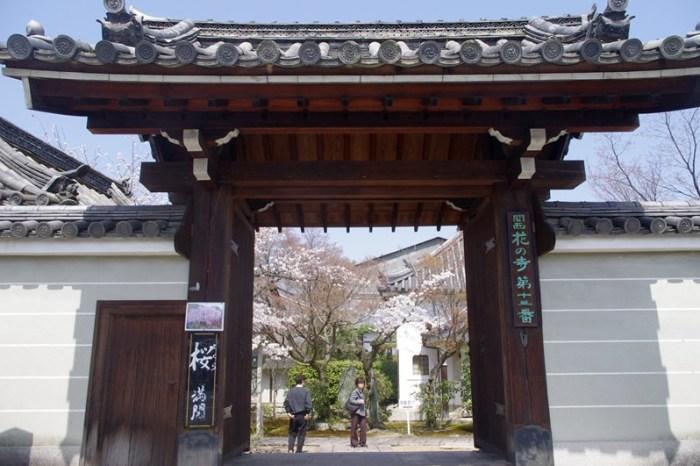 [2013花見] 関西花の寺 – 京都 法金剛院