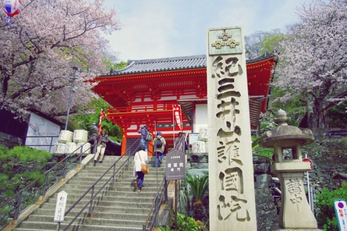 [2013花見] 櫻百選 – 和歌山 紀三井寺
