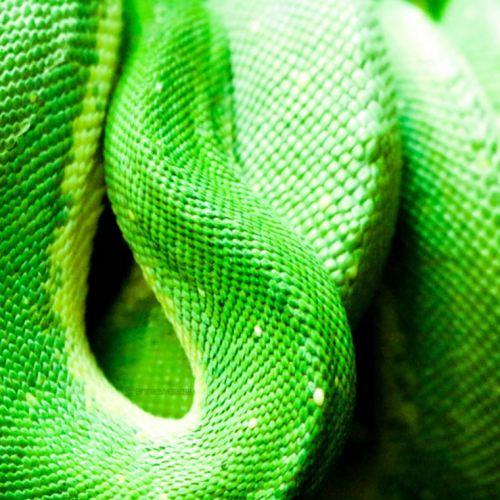 Toledo Zoo Part II: Birds, Reptiles & Mammals