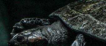 Toledo Zoo Part III: Aquarium