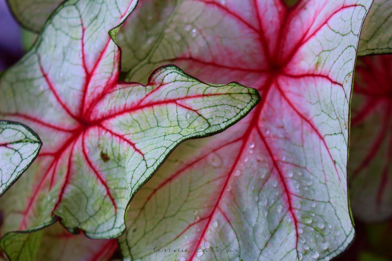 Leaves by Annie Fairfax