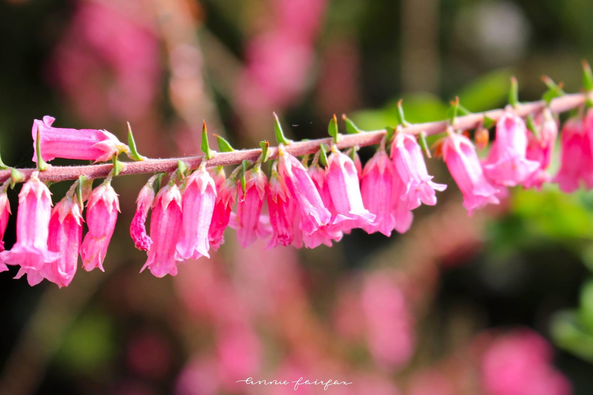 Plant Flower Photography By Annie Fairfax