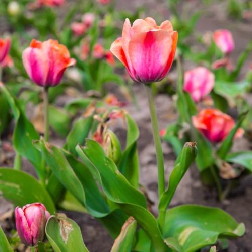 4 Spring Festivals to Celebrate