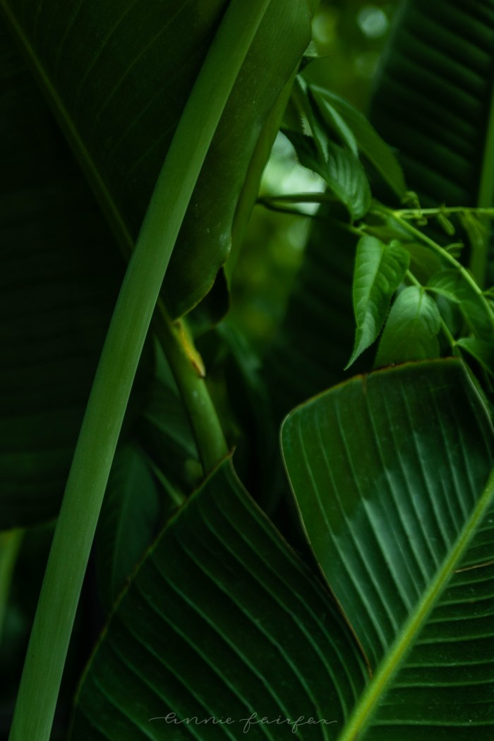 Intricate Botanicals