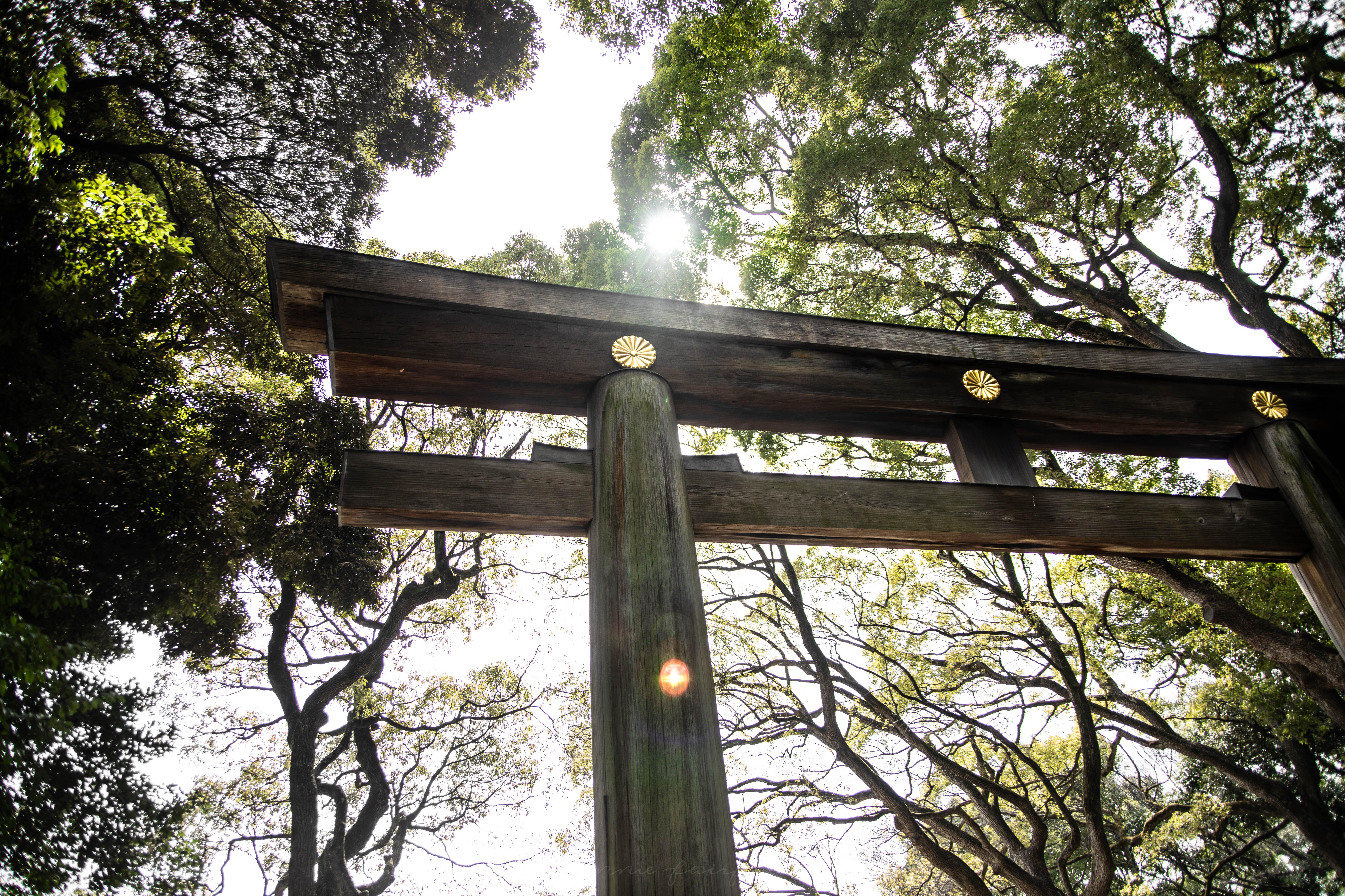 Meiji Shrine Gate in Harajuku in Tokyo, Japan by Annie Fairfax
