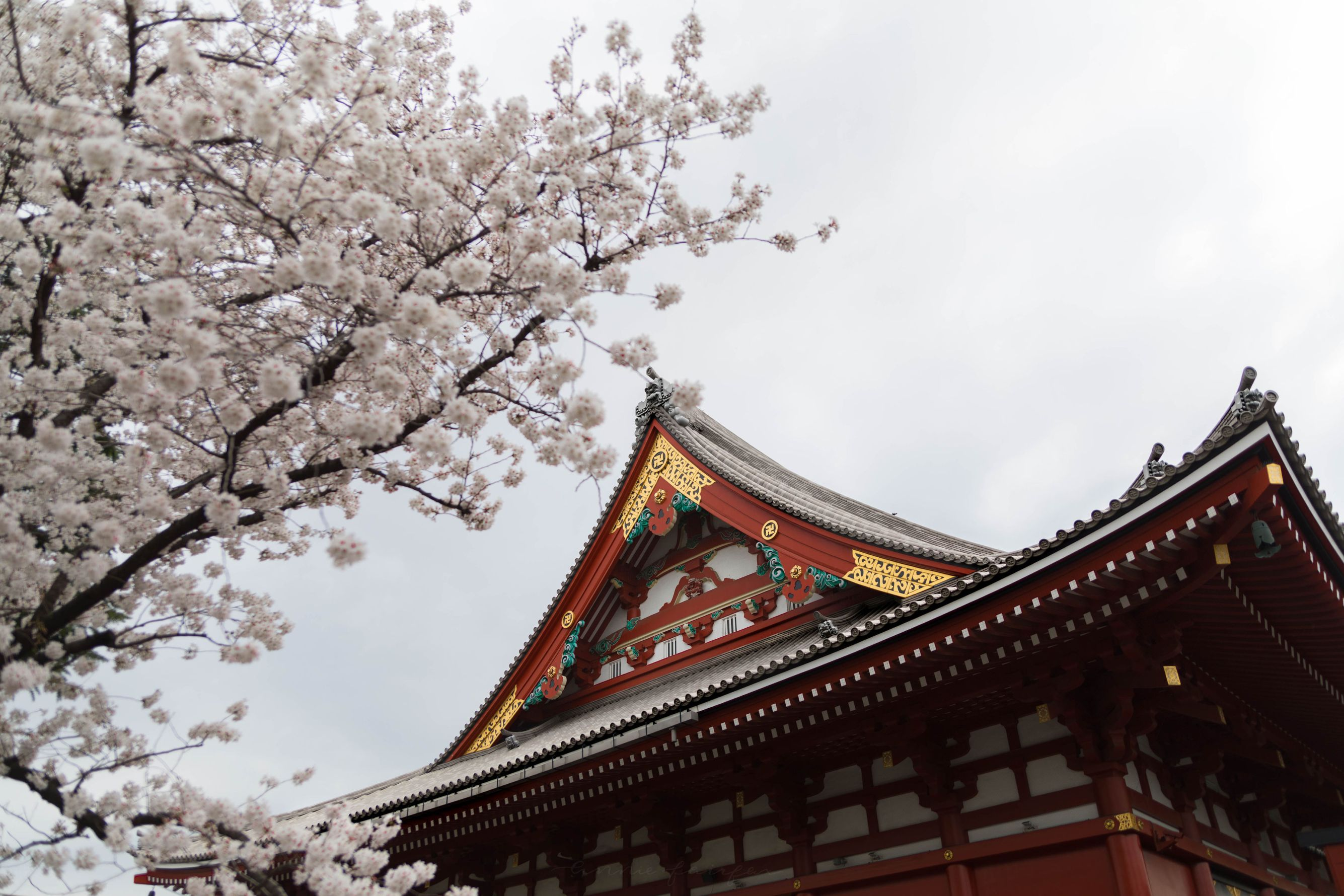 Senso-Ji Temple Asakusa Kannon Buddhist Temple in Tokyo, Japan Shrine with Massive Red Japanese Paper Lanterns Near Tokyo Sky Tree Goddess of Mercy by Annie Fairfax Where to Visit Tokyo Things to do In Tokyo, Japanese Travel Tourism Trip Inspiration Pictues of tokyo Japan
