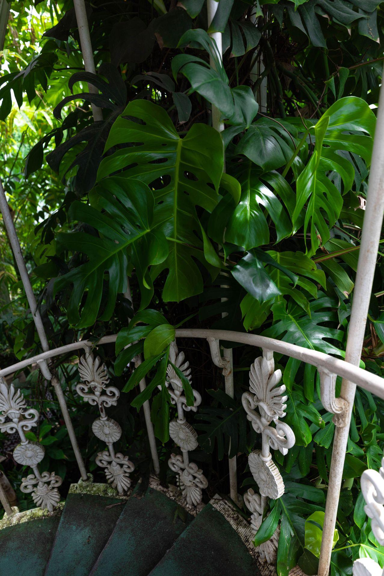 Royal Botanical Gardens, Kew in London, England, United Kingdom Beautiful Gardens of the World Things to Do in London English Botanical Gardens
