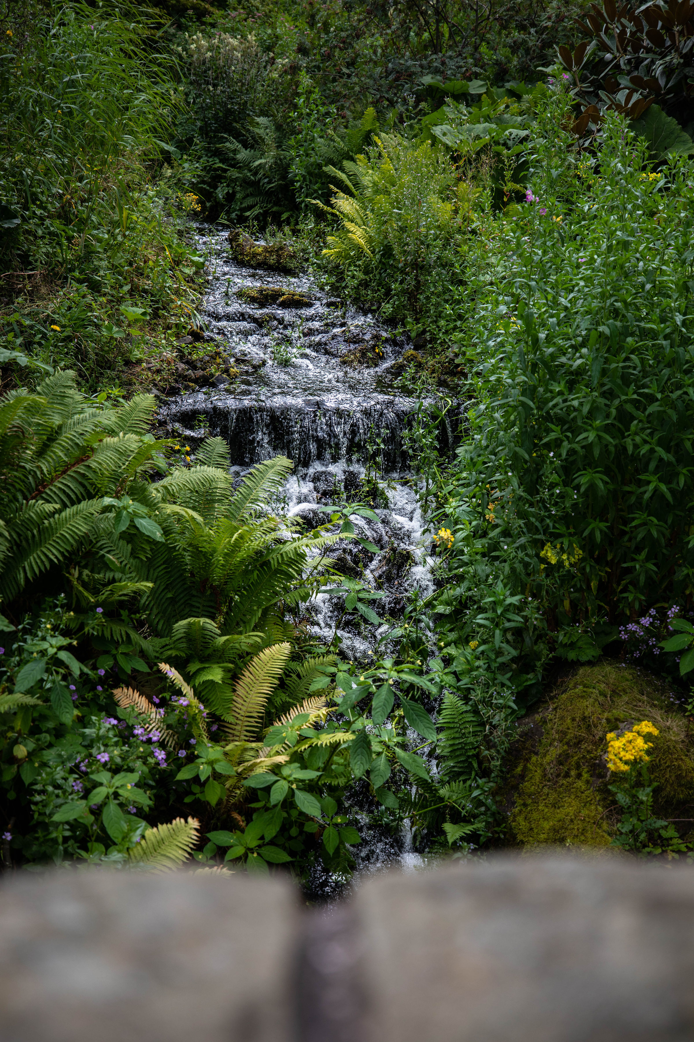 Waterfall at Royal Botanic Gardens Edinburgh in Edinburgh, Scotland United Kingdom