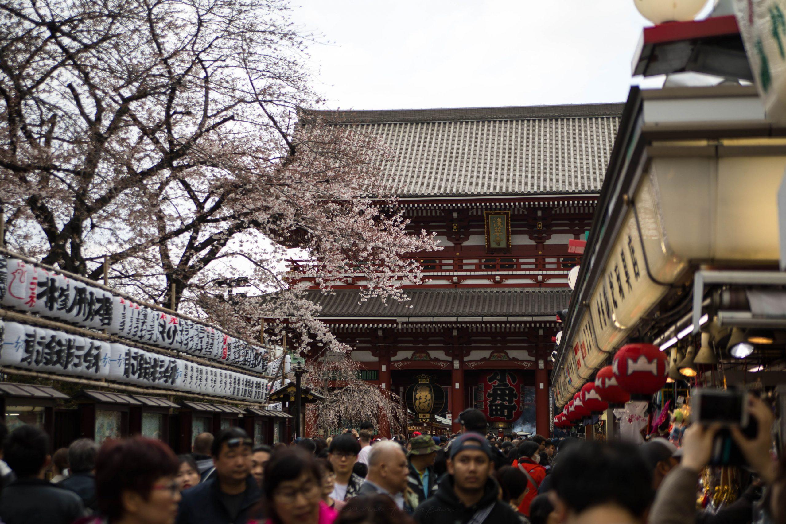 Temple Sales Area at Sensoji-Temple in Asakusa Tokyo Japan by Annie Fairfax