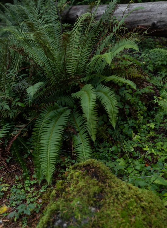 Ferns & Campground at Olympic National Park Travel Guide on the Olympic Peninsula in Washington by Annie Fairfax
