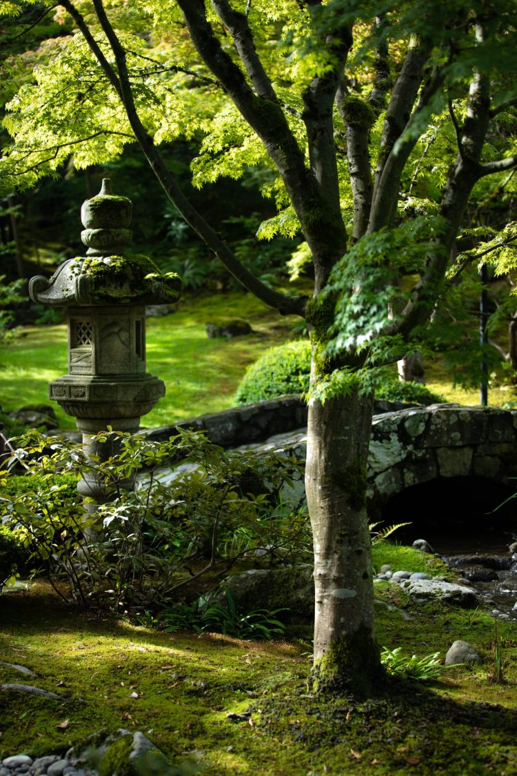 A Visit to the Seattle Japanese Garden