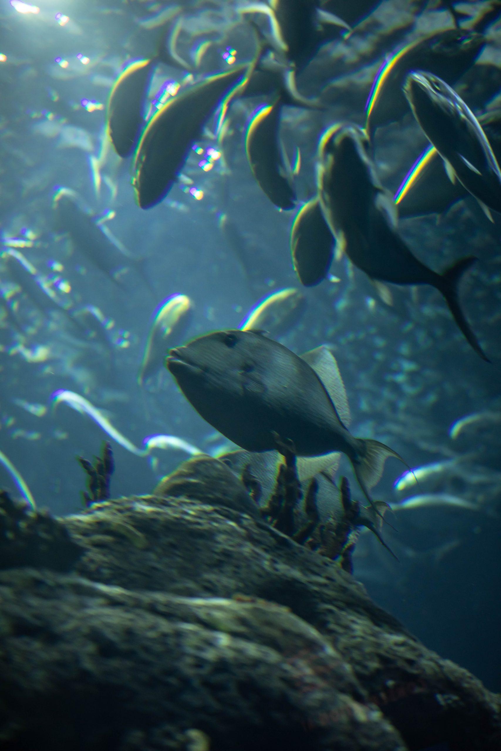 Fish at The South Carolina Aquarium & Sea Turtle Care Center Photographed by Luxury Travel Writer Annie Fairfax