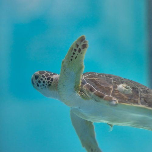 The South Carolina Aquarium & Sea Turtle Care Center Photographed by Luxury Travel Writer Annie Fairfax
